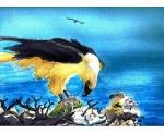 Sea-Eagle-SOLD.jpg