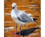 Seagull-11.jpg