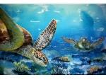turtle-encounter-1.jpg